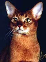 O Abyssinians 1997 Top Ten Abyssinia...