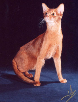O Abyssinians 2004 Top Ten Ab...