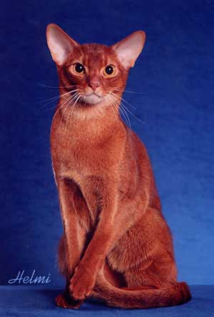 O Abyssinians 2006 Top Ten Ab...